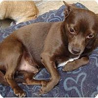 Adopt A Pet :: Forrester is a gem! - Leesport, PA
