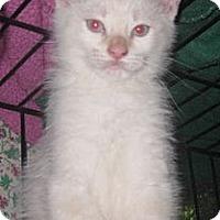 Adopt A Pet :: Opal - Dallas, TX