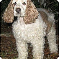 Adopt A Pet :: Valentina - Sugarland, TX