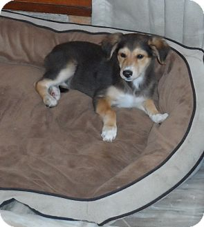 Hound (Unknown Type) Puppy for adoption in Monroe, New Jersey - Chini