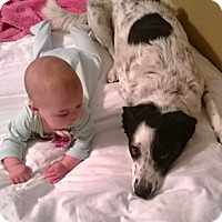 Adopt A Pet :: Gracie Mae - Scottsdale, AZ