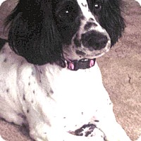 Adopt A Pet :: Riplee - Sugarland, TX