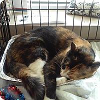 Adopt A Pet :: Foxy - Woodstock, GA