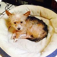 Adopt A Pet :: Jet - Hazard, KY