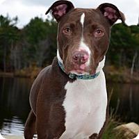 Adopt A Pet :: Quick - Framingham, MA