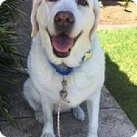 Adopt A Pet :: Sunny Mae - Torrance, CA