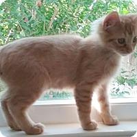 Adopt A Pet :: Skiles - North Highlands, CA