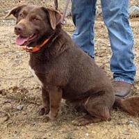 Adopt A Pet :: Jake - Manchester, NH