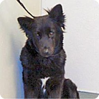 Shepherd (Unknown Type) Mix Dog for adoption in Wildomar, California - Cali