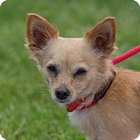 Adopt A Pet :: Russia - Dearborn, MI