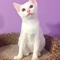 Adopt A Pet :: Astrid - Santa Fe, TX