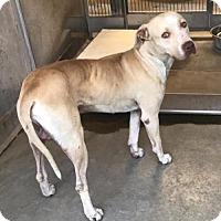 Adopt A Pet :: Arthur Meyer - Seattle, WA
