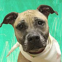 Adopt A Pet :: Doja - Cincinnati, OH