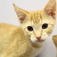 Adopt A Pet :: DJ II - Raleigh, NC