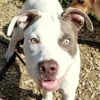 Adopt A Pet :: Sadie - Valley View, OH