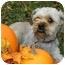 Photo 2 - Shih Tzu Mix Dog for adoption in Ladysmith, Wisconsin - D0307