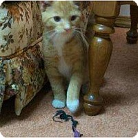 Adopt A Pet :: Bert  (and Bertie) - Watsontown, PA