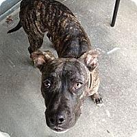 Adopt A Pet :: Kona - Austin, TX