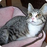 Adopt A Pet :: K-Sitka1-Lily - Colorado Springs, CO