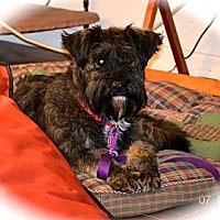 Adopt A Pet :: Bashful - Phoenix, AZ