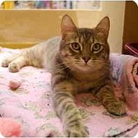 Adopt A Pet :: Reynolds - Modesto, CA
