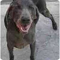Adopt A Pet :: Seville  **ADOPTED** - Eustis, FL