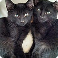 Adopt A Pet :: Peanut's Boys - Scottsdale, AZ