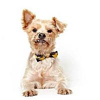 Adopt A Pet :: Gareth - New York, NY