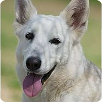 Adopt A Pet :: Phoenix - Providence, RI