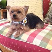 Adopt A Pet :: Sweet Pea - Conroe, TX
