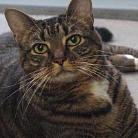 Adopt A Pet :: Dowdy - Greenville, NC