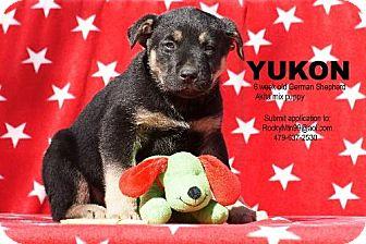 German Shepherd Dog/Akita Mix Puppy for adoption in Waldron, Arkansas - Yukon Alexander