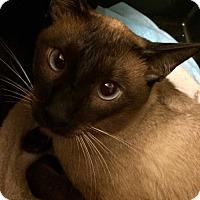 Adopt A Pet :: Hershey - Hamilton, ON