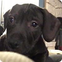 Adopt A Pet :: Spawn - Gainesville, FL