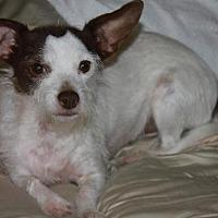 Adopt A Pet :: Roxy - Buckeye, AZ