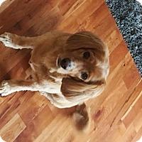Adopt A Pet :: Ruxen - Lucknow, ON