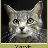 Adopt A Pet :: Zanti - Sullivan, IN