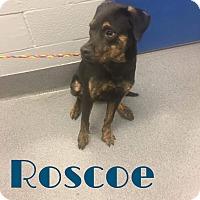 Adopt A Pet :: Roscoe - Grand Rapids, MI