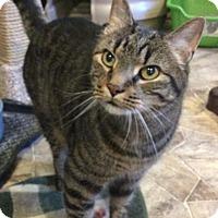 Adopt A Pet :: Centro - Breinigsville, PA