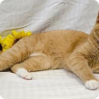 Adopt A Pet :: RAZZI - Sandusky, OH