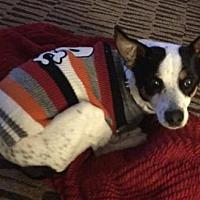 Adopt A Pet :: Josie - West Allis, WI