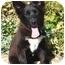 Photo 1 - Husky/Border Collie Mix Puppy for adoption in Los Angeles, California - Nina von Kern