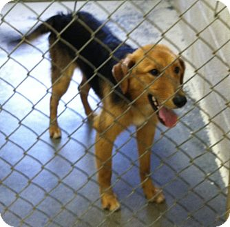 Collie Mix Dog for adoption in Greensburg, Pennsylvania - Cooper
