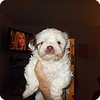 Adopt A Pet :: Spook - Apex, NC