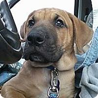 Adopt A Pet :: Sammy - Golden Valley, AZ