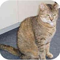 Adopt A Pet :: Emmy - North Boston, NY