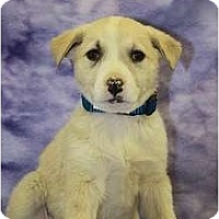 Adopt A Pet :: Cypress - Broomfield, CO