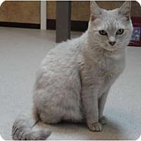 Adopt A Pet :: Martha - Kingston, WA
