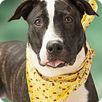 Adopt A Pet :: Tuck - Cincinnati, OH