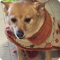 Adopt A Pet :: Georgia - Muskegon, MI